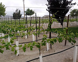 Pahrump Valley Wine Tour